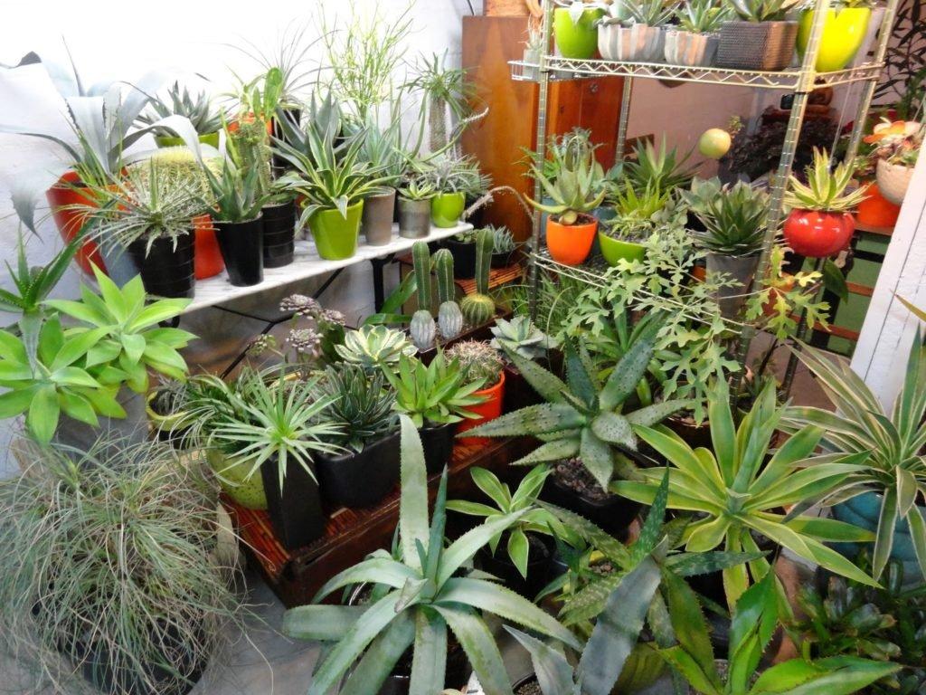 zahradnyzima