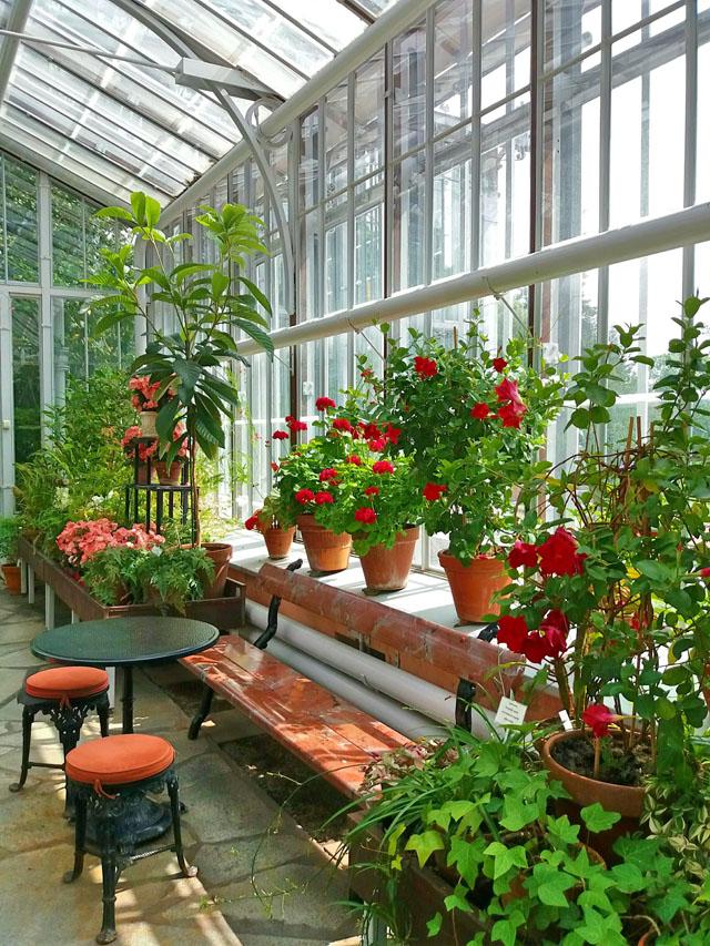 Kvety v skleníku