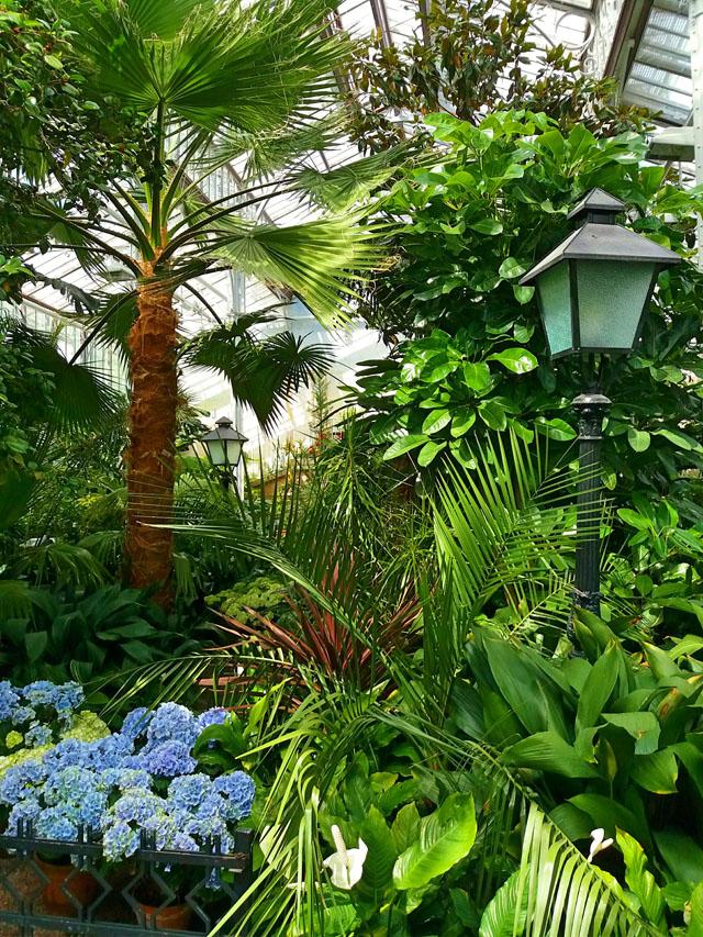 Rastliny vo veľkom skleníku