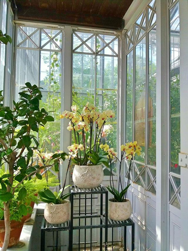 Kvety v kúte v skleníku