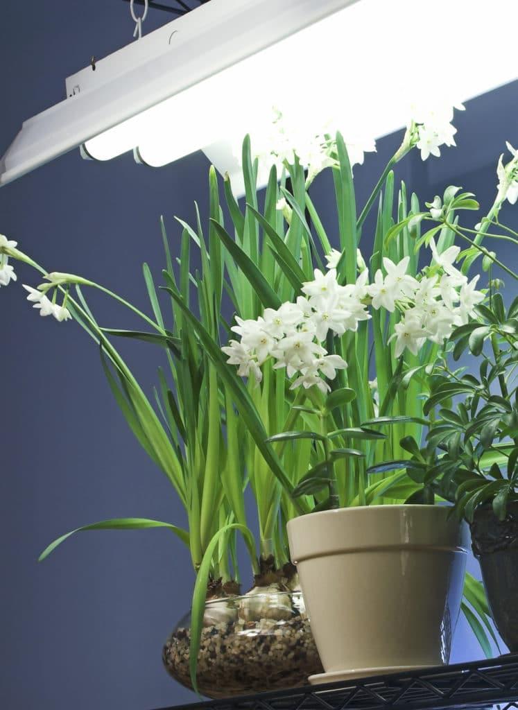 Umelé osvetlenie pre kvety
