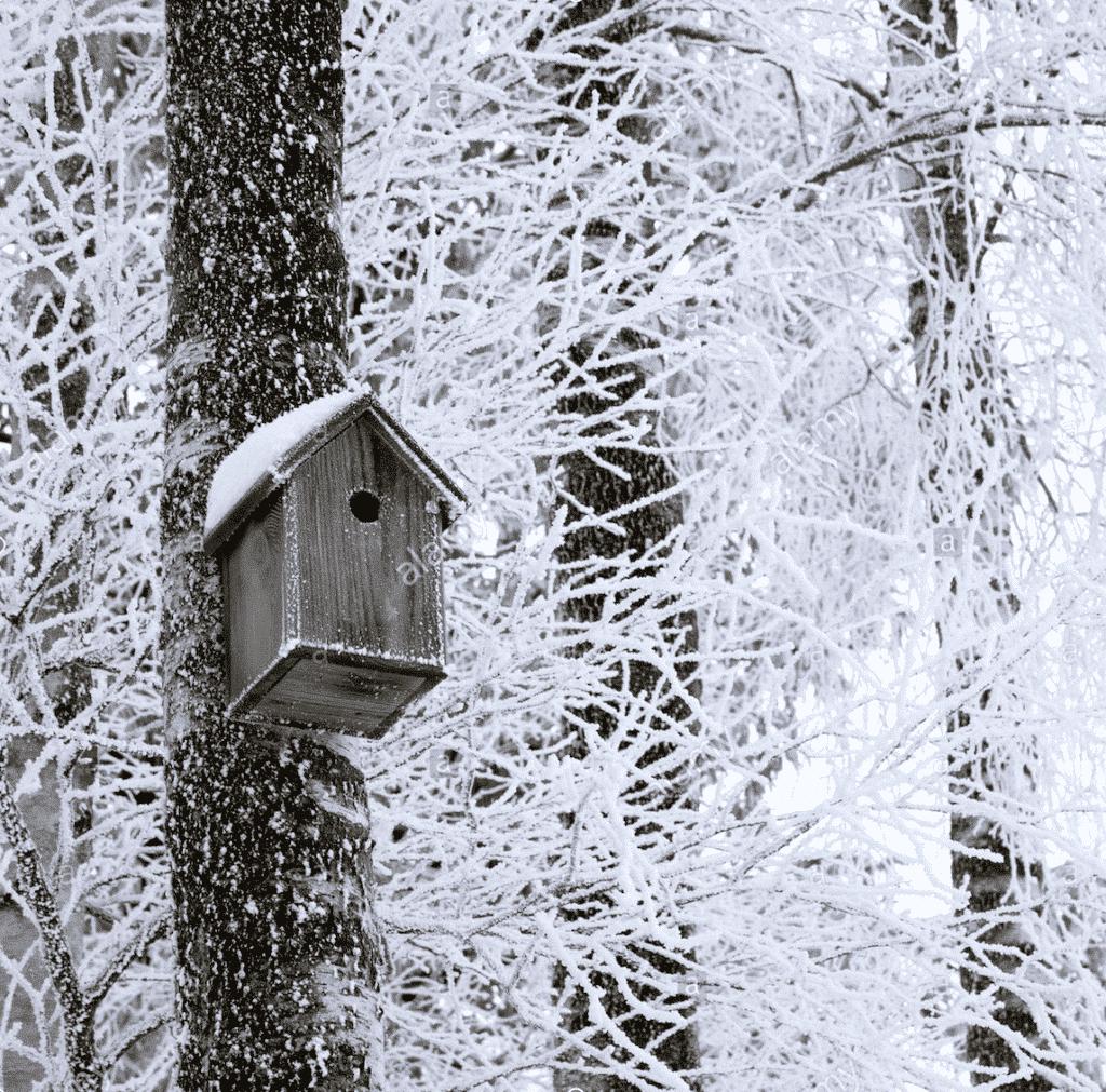 Vtáčia búdka na zasneženom strome