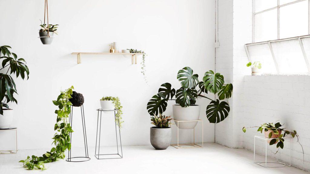 Rastliny v bielej miestnosti