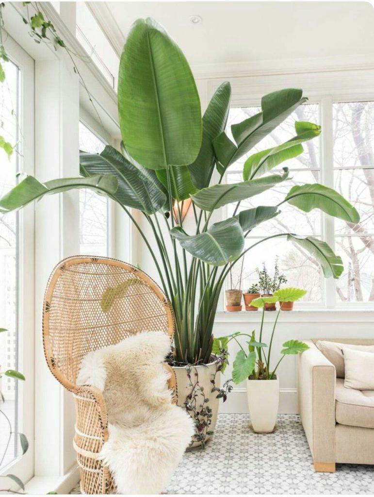 Rastliny v bielo zariadenej miestnosti