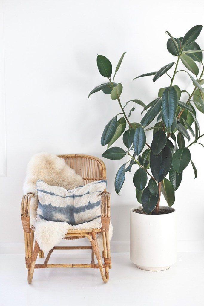 Rastlina pri drevenom hojdaciom kresle