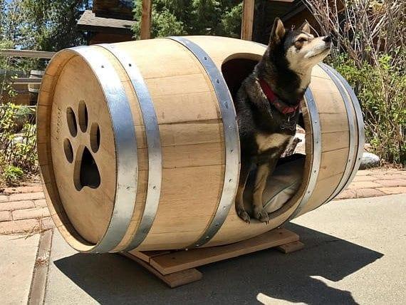 Pes v sude