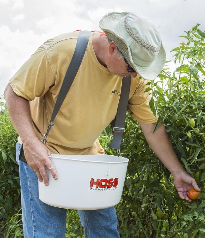 Muž zbiera paradajky na záhrade