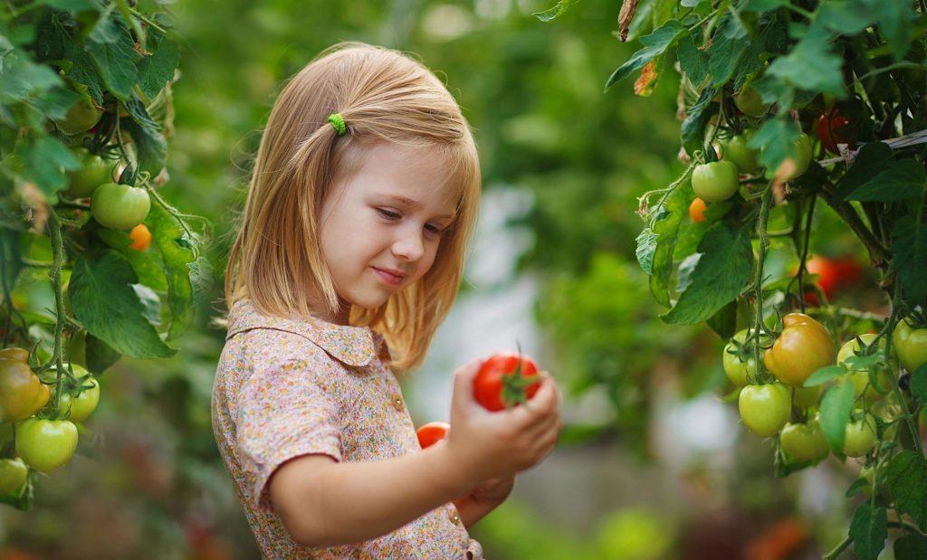 Dievča drží paradajku