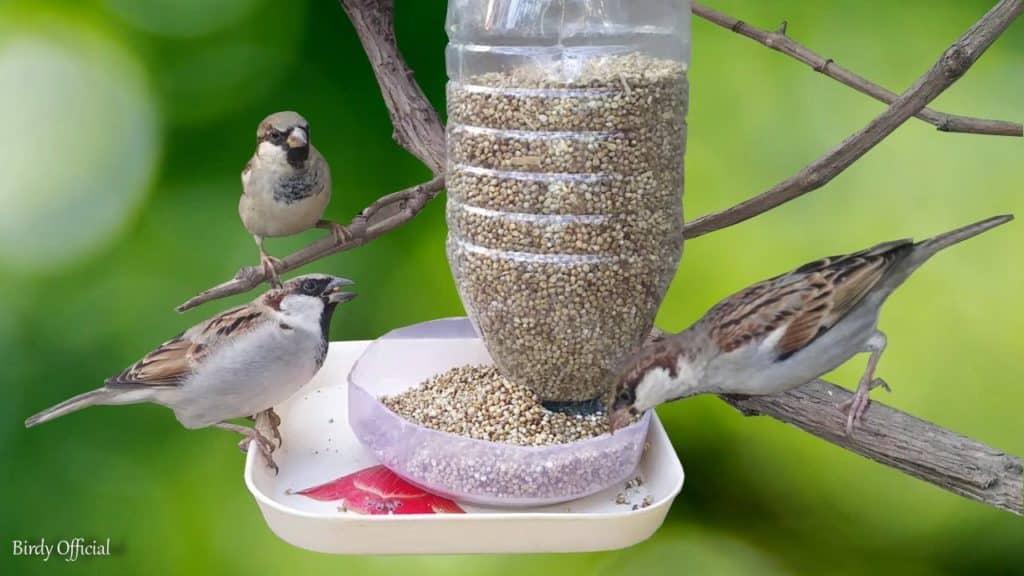 Vtáčiky pri kŕmitku