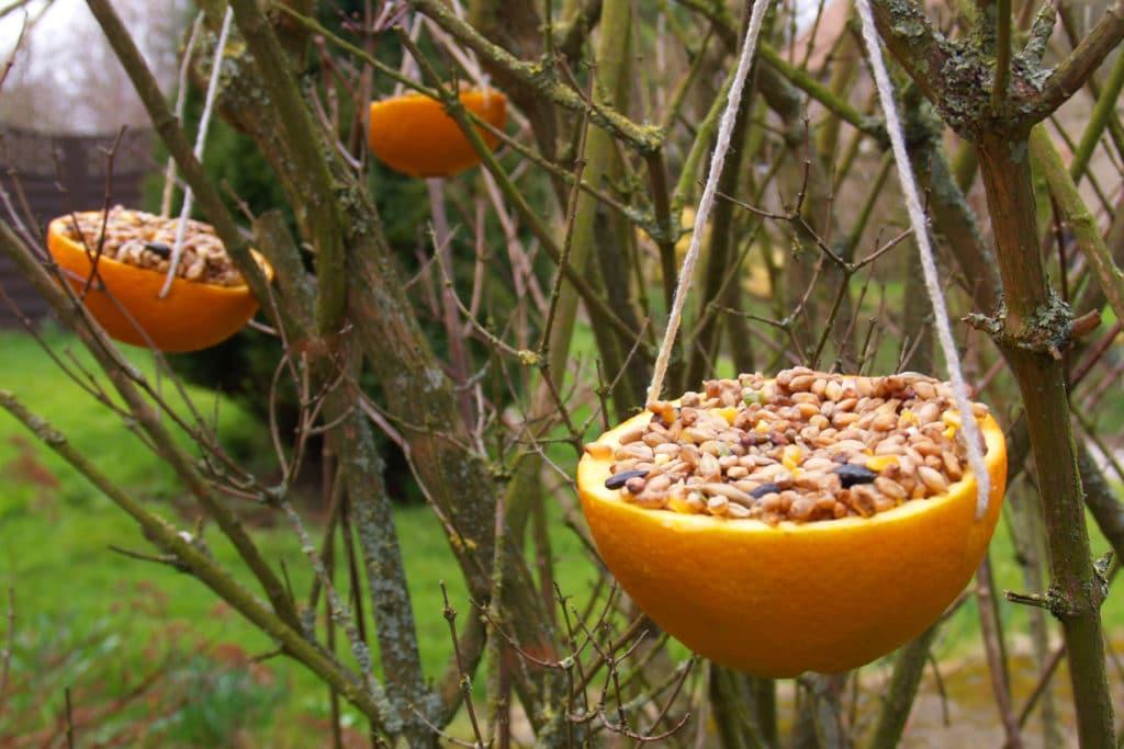 Kŕmidlá zavesené v lese v pomarančových miskách