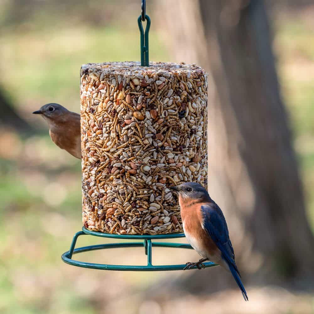 Kŕmidlo s vtáčikmi