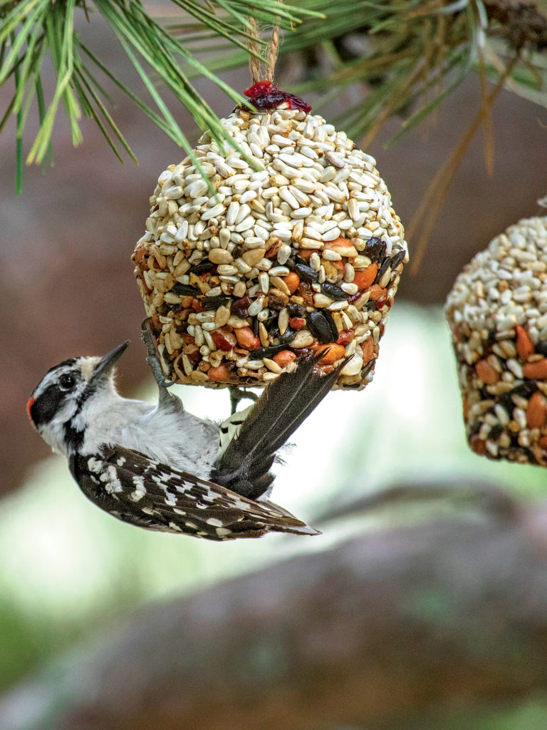 Kŕmidlo s vtáčikom na ihličnatom strome
