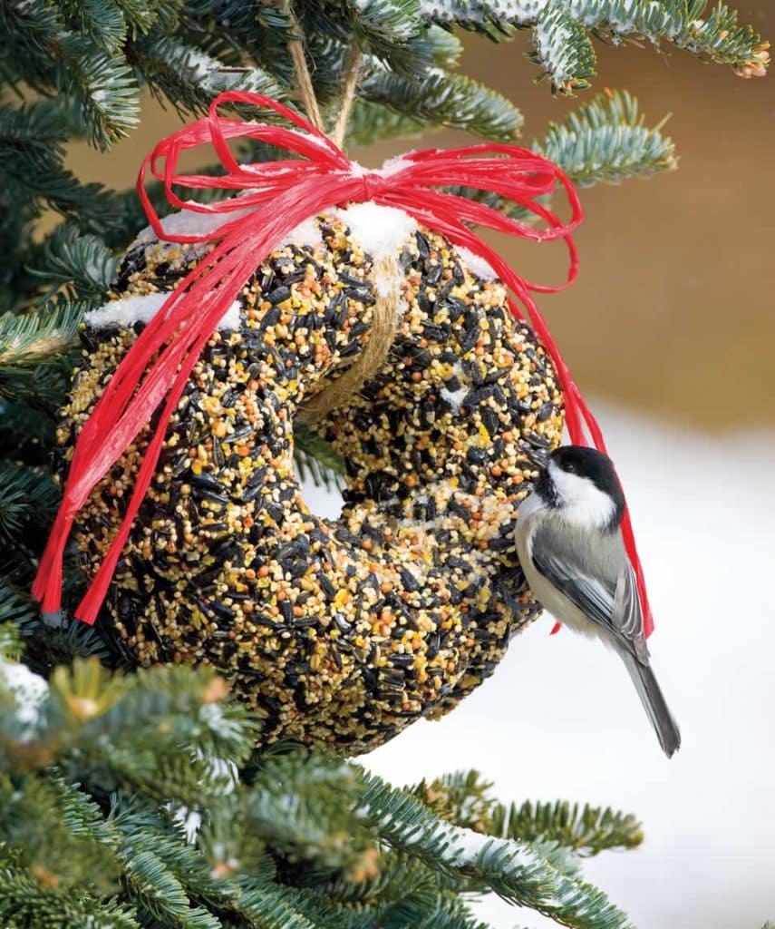 Jedlá ozdoba pre vtáčika