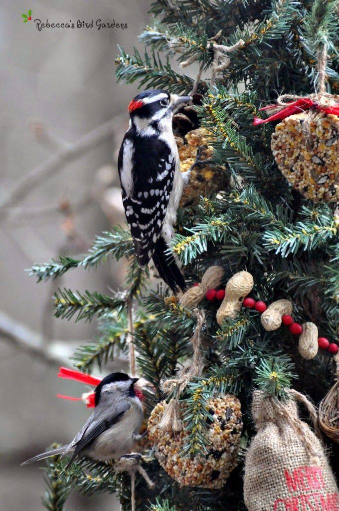 Vtáky na ihličnatom strome s jedlými ozdobami