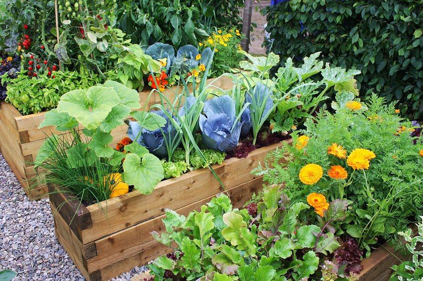 Kochlíky plné farebných byliniek