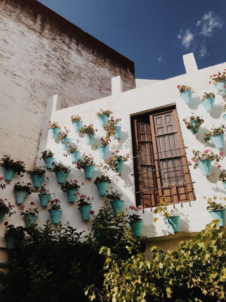 Kvety zavesené na stene
