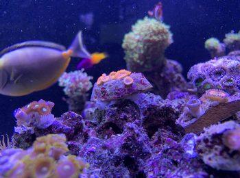 Morské akvárium v showroome GARDEON