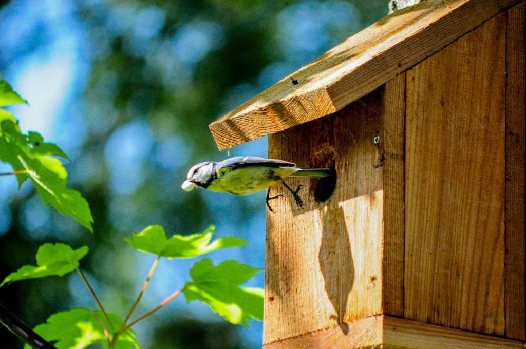 Drevená vtáčia búdka