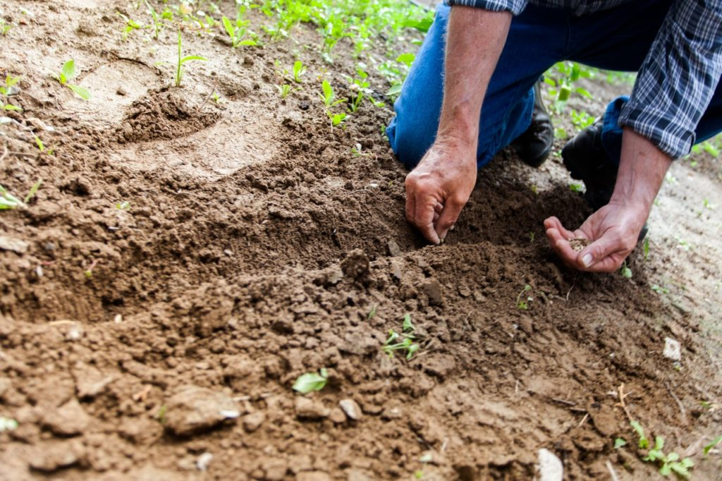 Muž sadí rastliny