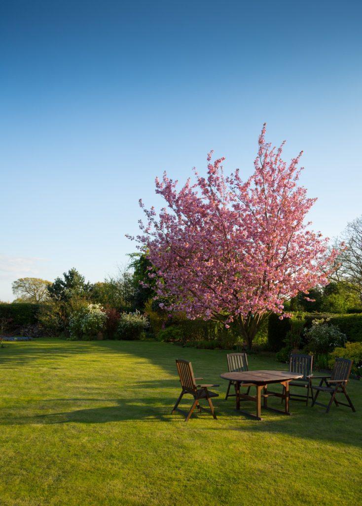 Záhradné posedenie pri strome