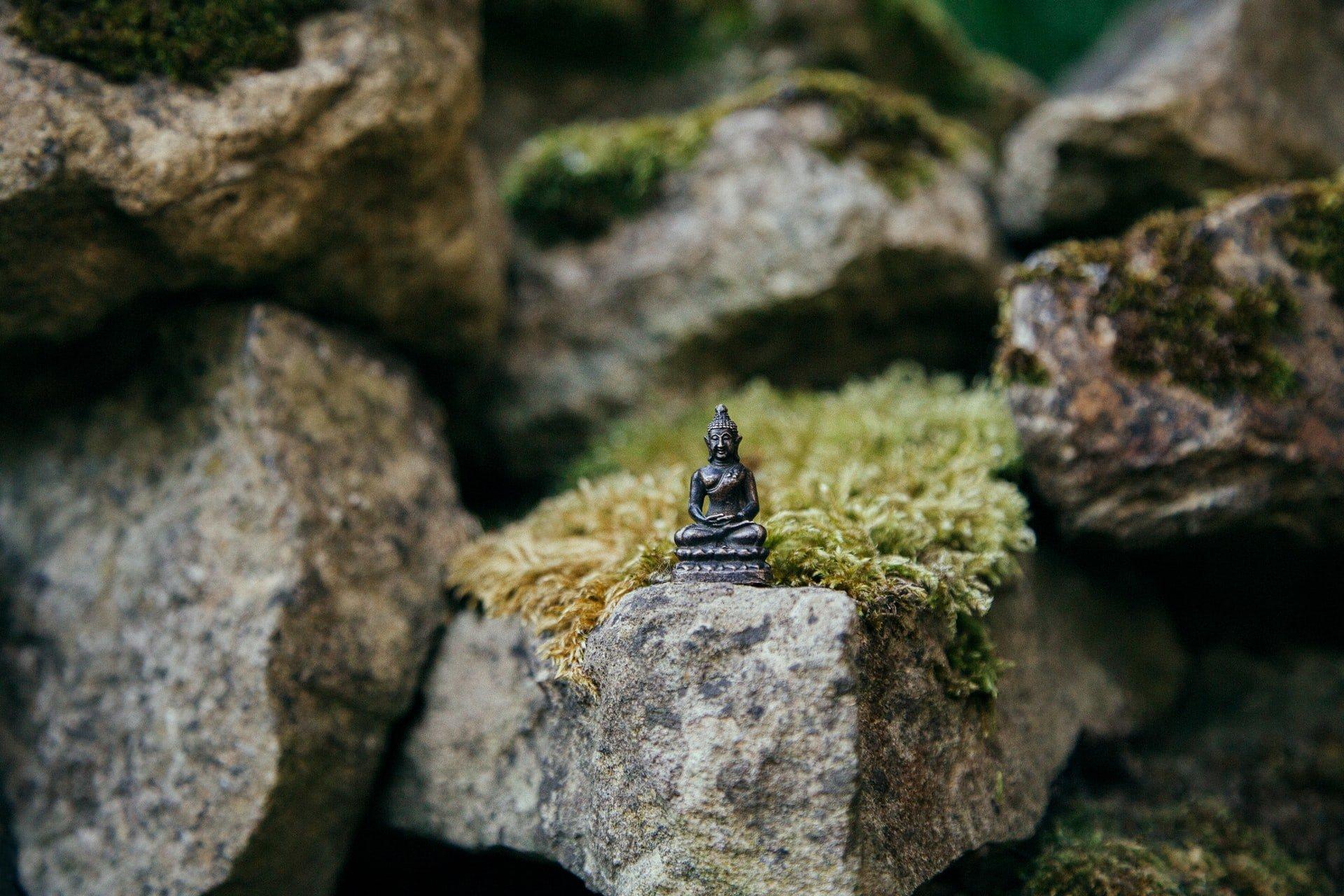 Mach na kameni
