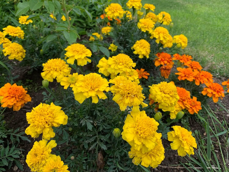 Kvety v záhrade