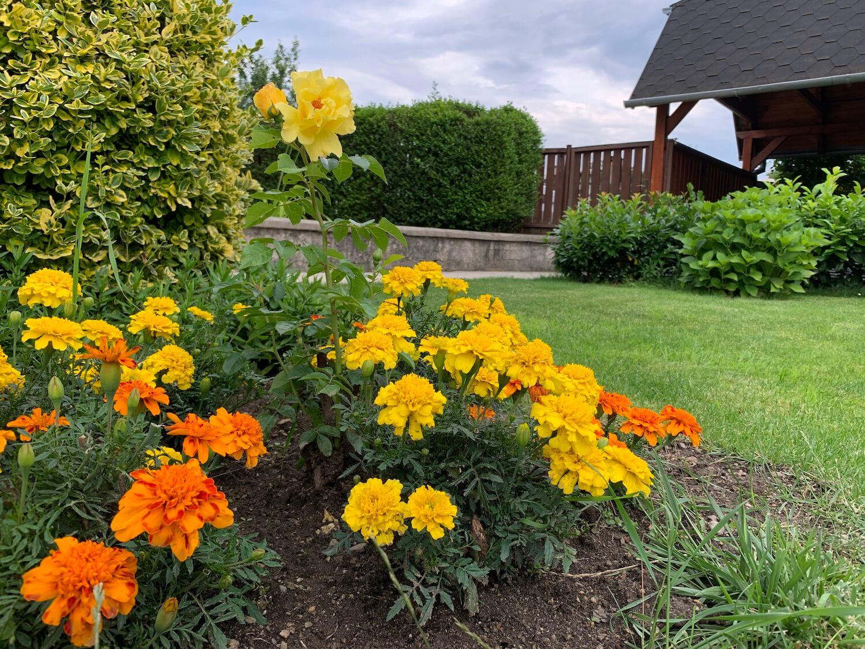 Žlté a oranžové kvety v záhrade