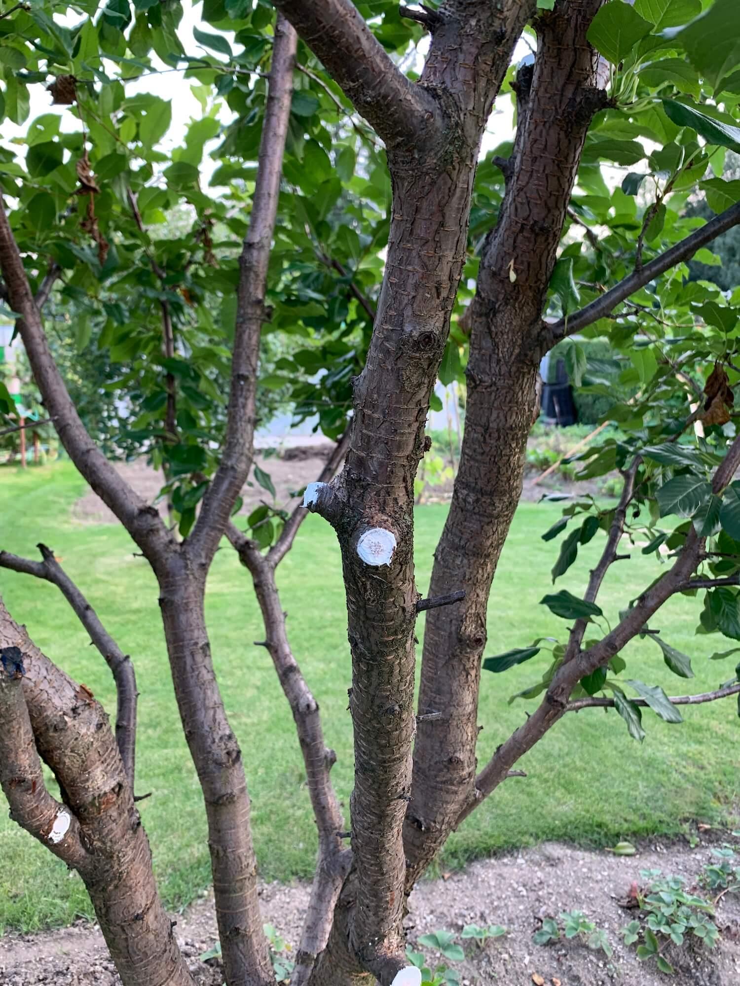 Orezaný stromček v záhrade