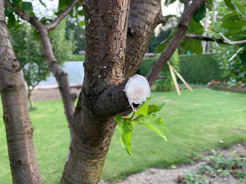 Bližší pohľad na orezaný stromček