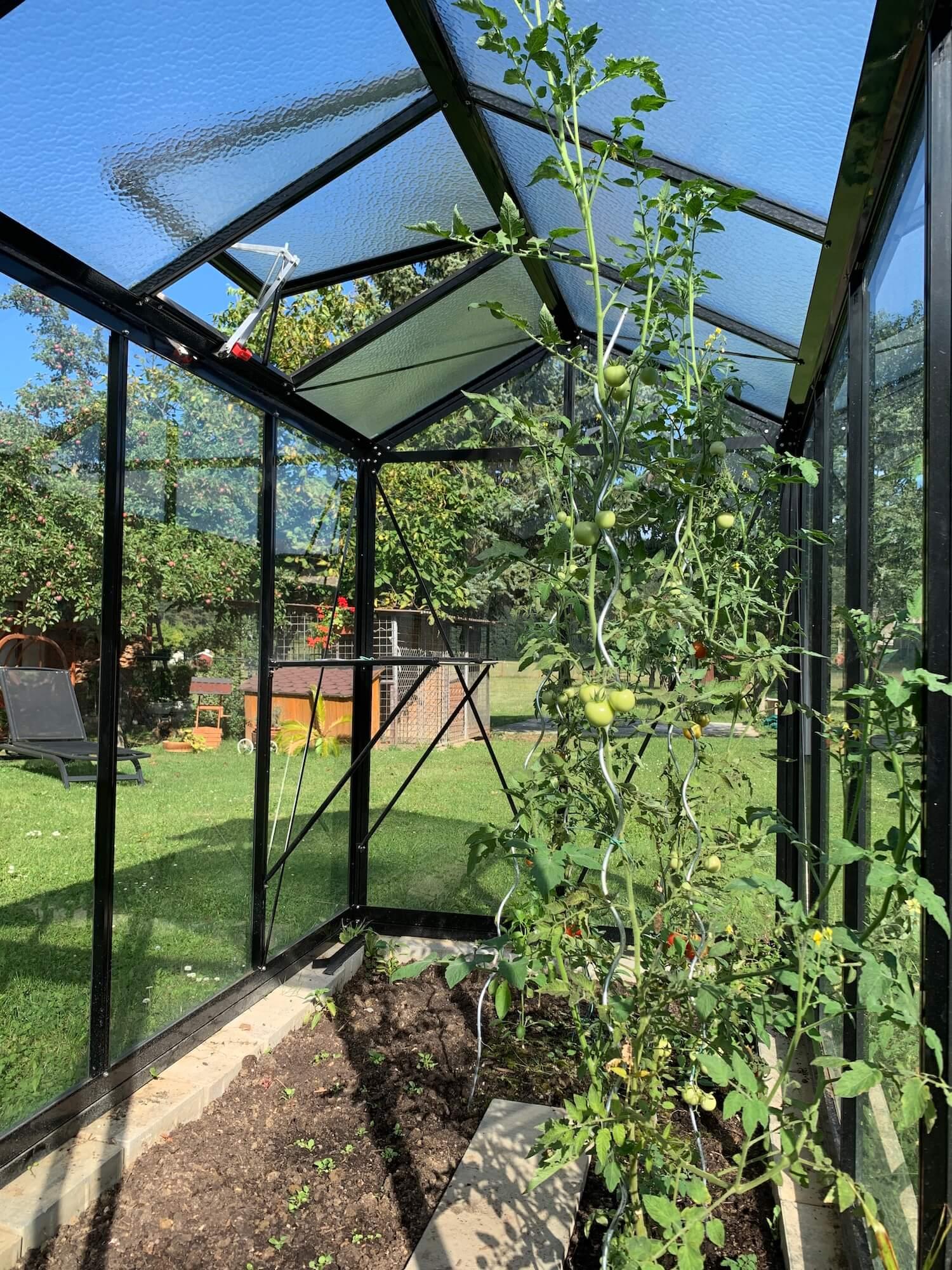 Vnútro skleníka s ovocím