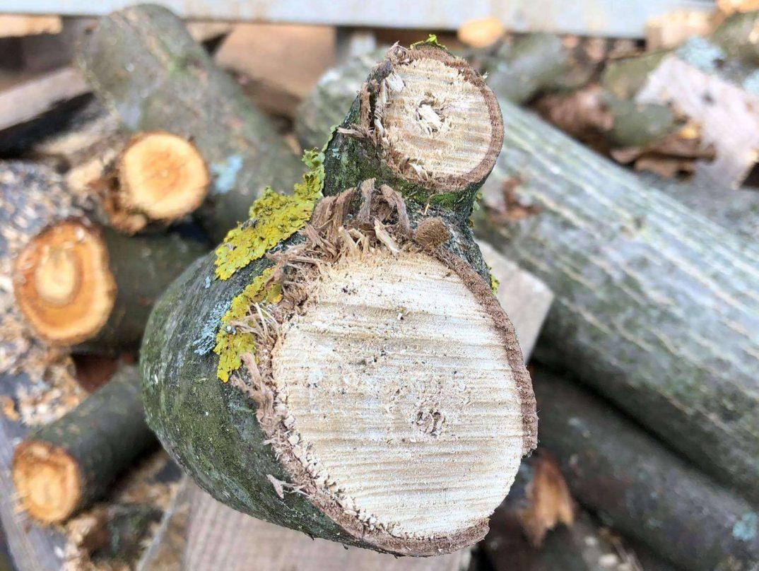 Odštiepený konár dreva