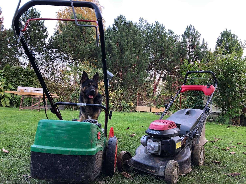 Dve kosačky pred psíkom