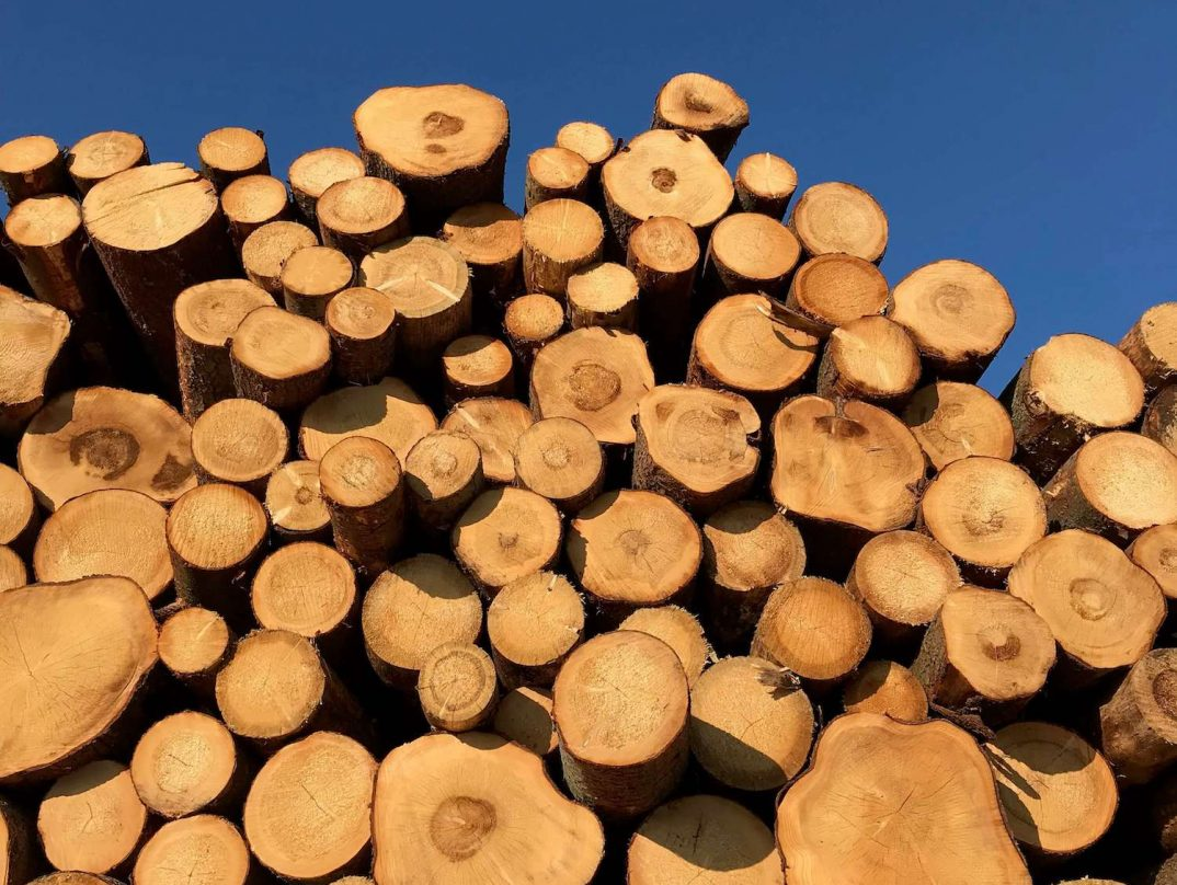 Kopa napíleného dreva