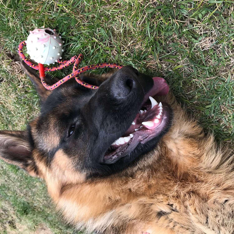 Pes leží a hrá sa s loptou