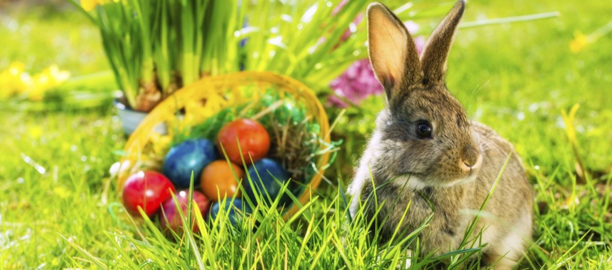 Zajac pri maľovanýcg vájičkach