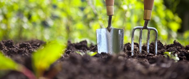 6 tipov na jarnú starostlivosť o vašu záhradu