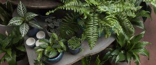 Ako udržať vonkajšie rastliny na žive aj cez zimu