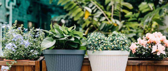 7+ inšpirácií na vertikálnu výzdobu záhrady
