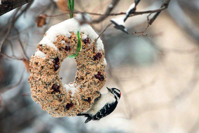 Jedlá ozdoba pre vtáčiky