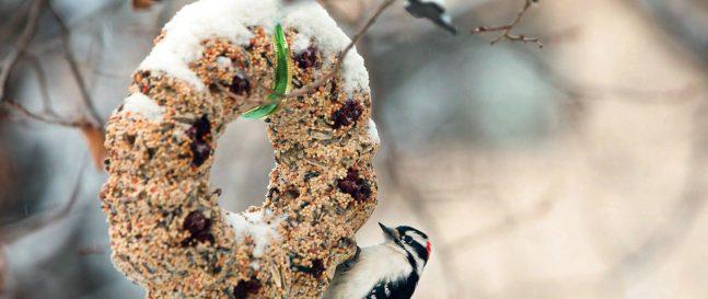 9+ inšpirácií na výrobu kŕmidiel a domčekov pre vtáčiky sdeťmi