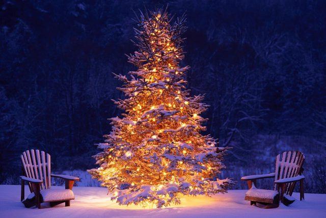 Osvetlený živý stromček na záhrade