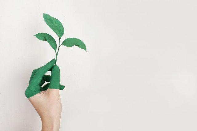 Zelená rastlina v ruke