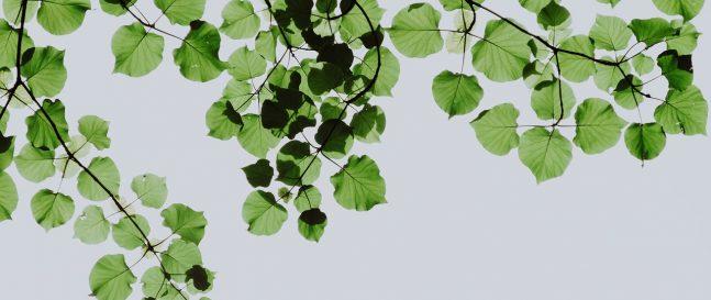 Zelené listy na strome