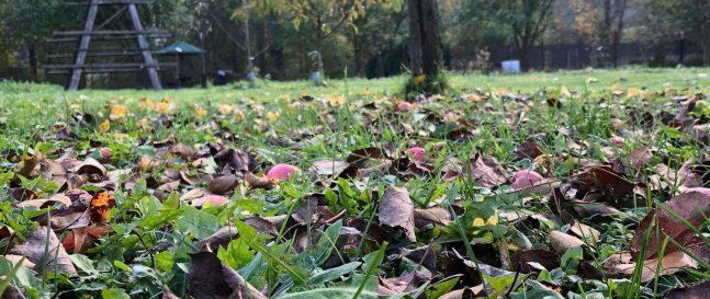 Opadané jablká v tráve