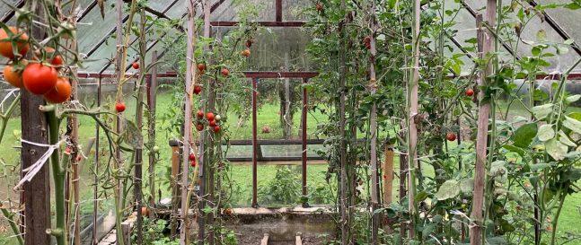 Úroda vo vnútri skleníka
