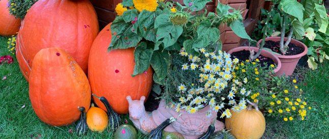 Tekvice a kvety v dóze slimáka